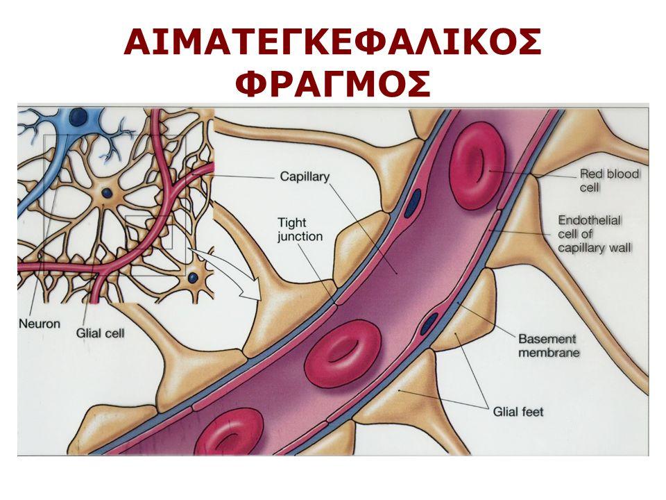 ΑΙΜΑΤΕΓΚΕΦΑΛΙΚΟΣ ΦΡΑΓΜΟΣ