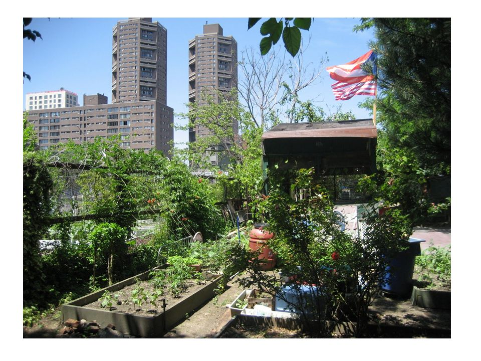 http://www.farmgarden.org.uk/farms-gardens About City Farms and Community Gardens What are city farms and community gardens.
