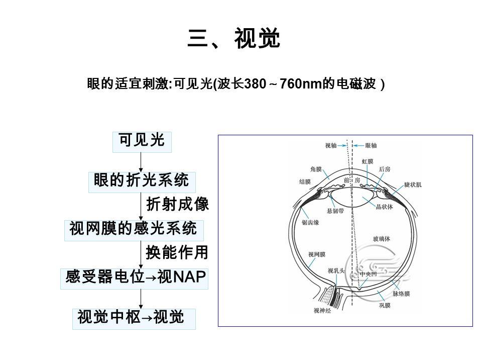 三、视觉 可见光 眼的折光系统 折射成像 视网膜的感光系统 换能作用 感受器电位 → 视 NAP 视觉中枢 → 视觉 眼的适宜刺激 : 可见光 ( 波长 380 ~ 760nm 的电磁波)