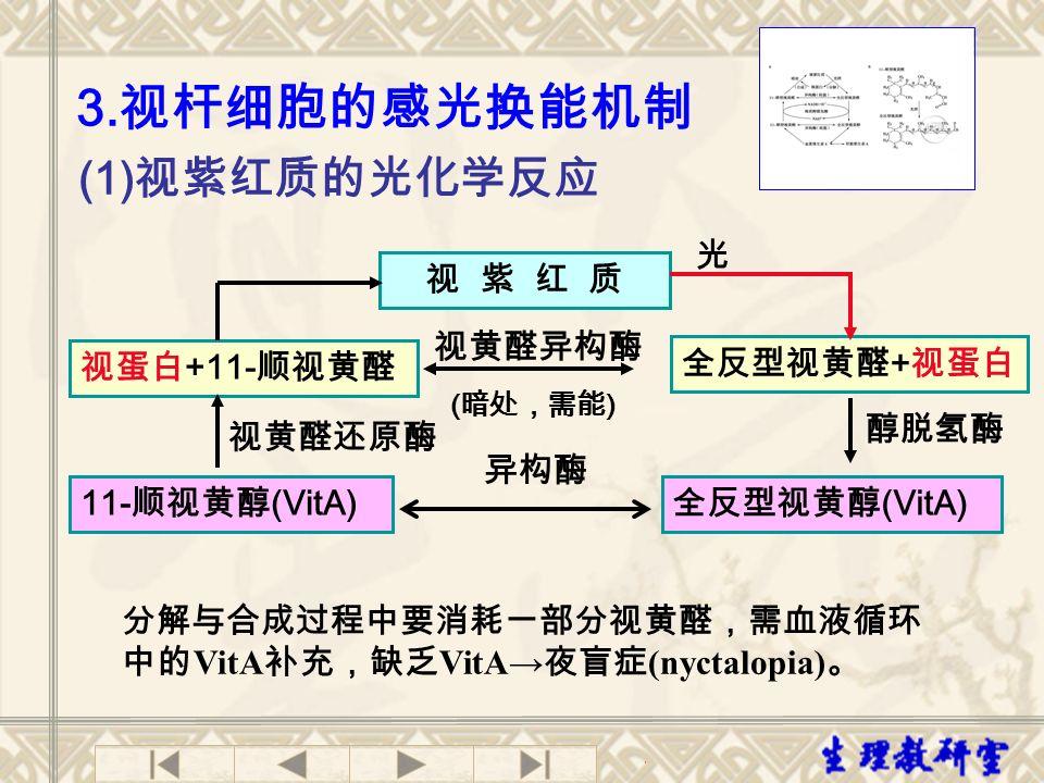 (1) 视紫红质的光化学反应 3.