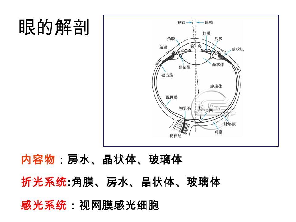 折光系统 : 角膜、房水、晶状体、玻璃体 感光系统:视网膜感光细胞 眼的解剖 内容物:房水、晶状体、玻璃体