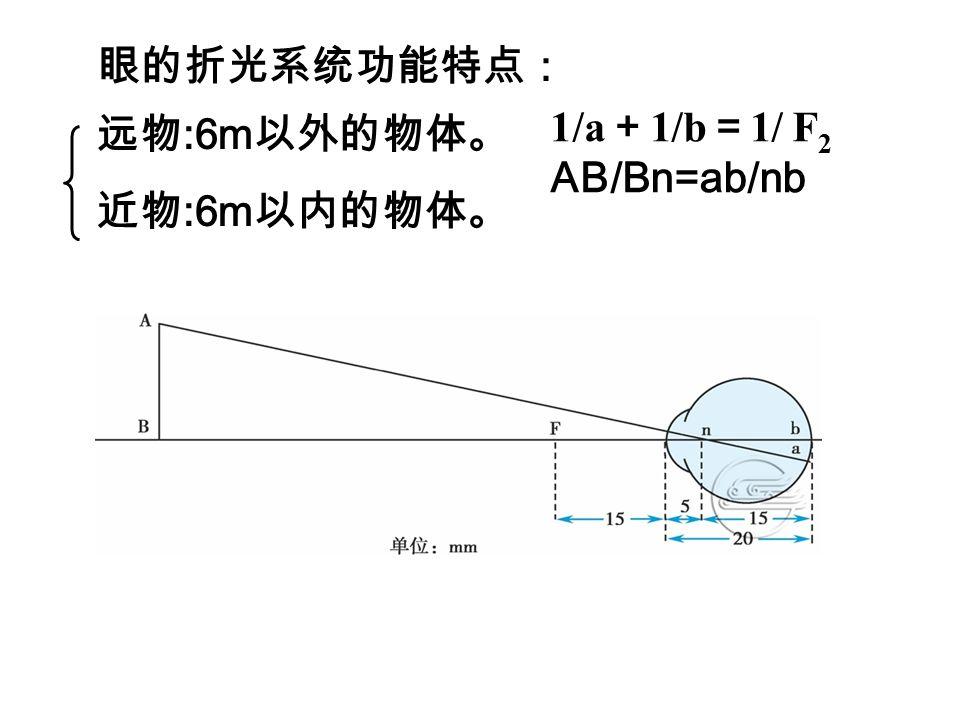 2 、眼的调节 远点: 眼不作任何调节时所能看清的物体的最远距离。 ( 1 )眼的近反射: 正常人眼看近物时,眼折光系 统的折光能力能随物体的移近而相应的改变, 使物像 仍落在视网膜上,看清近物的调节过程。 晶状体变凸、瞳孔缩小、视轴会聚 1/a + 1/b = 1/F2