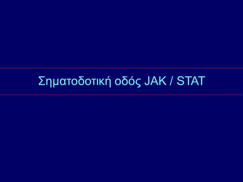 Σηματοδοτική οδός JAK / STAT
