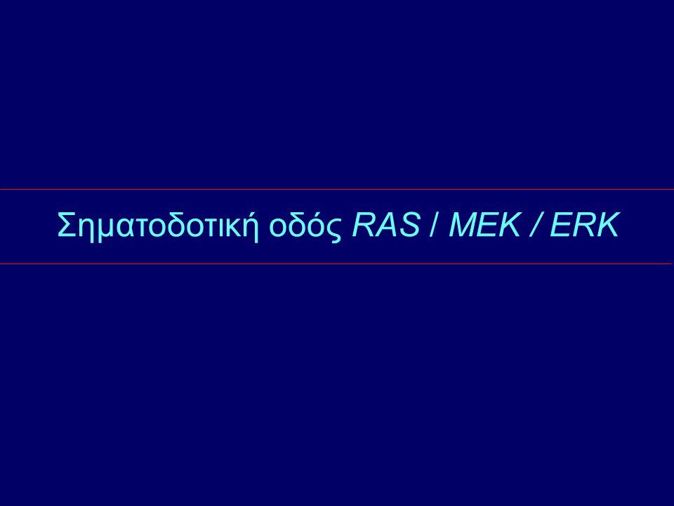 Σηματοδοτική οδός RAS / MEK / ERK