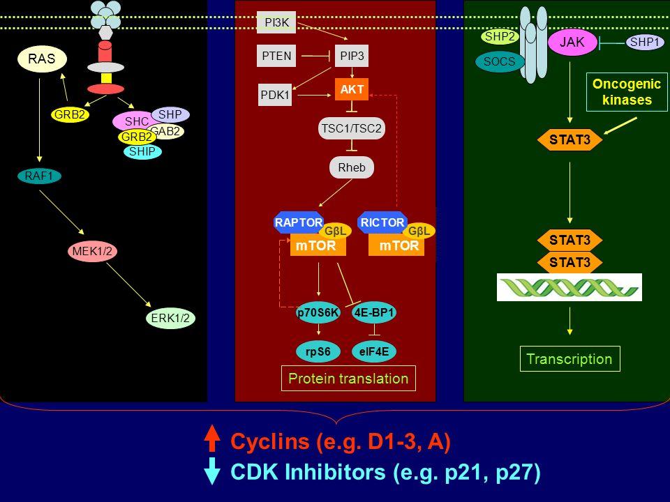 PTEN TSC1/TSC2 Rheb AKT PI3K PDK1 PIP3 p70S6K4E-BP1 eIF4ErpS6 GβL mTOR RAPTOR GβL mTOR RICTOR Protein translation Flt3 GRB2 RAS ERK1/2 RAF1 MEK1/2 SHC SHIP SHP GAB2 GRB2 Cyclins (e.g.