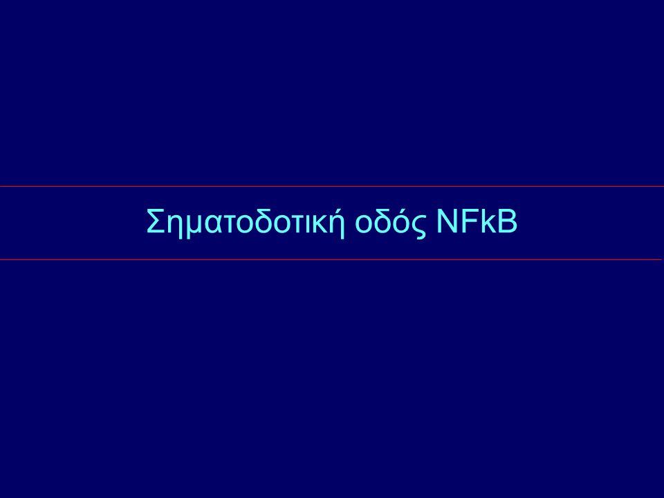 Σηματοδοτική οδός NFkB