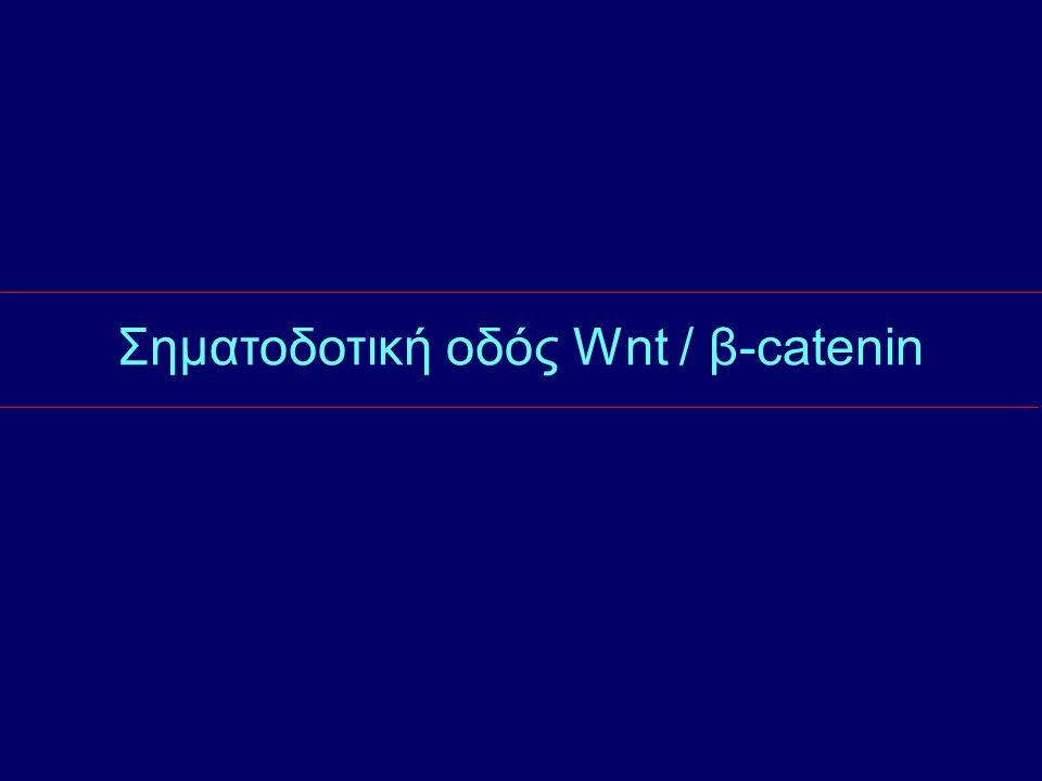 Σηματοδοτική οδός Wnt / β-catenin