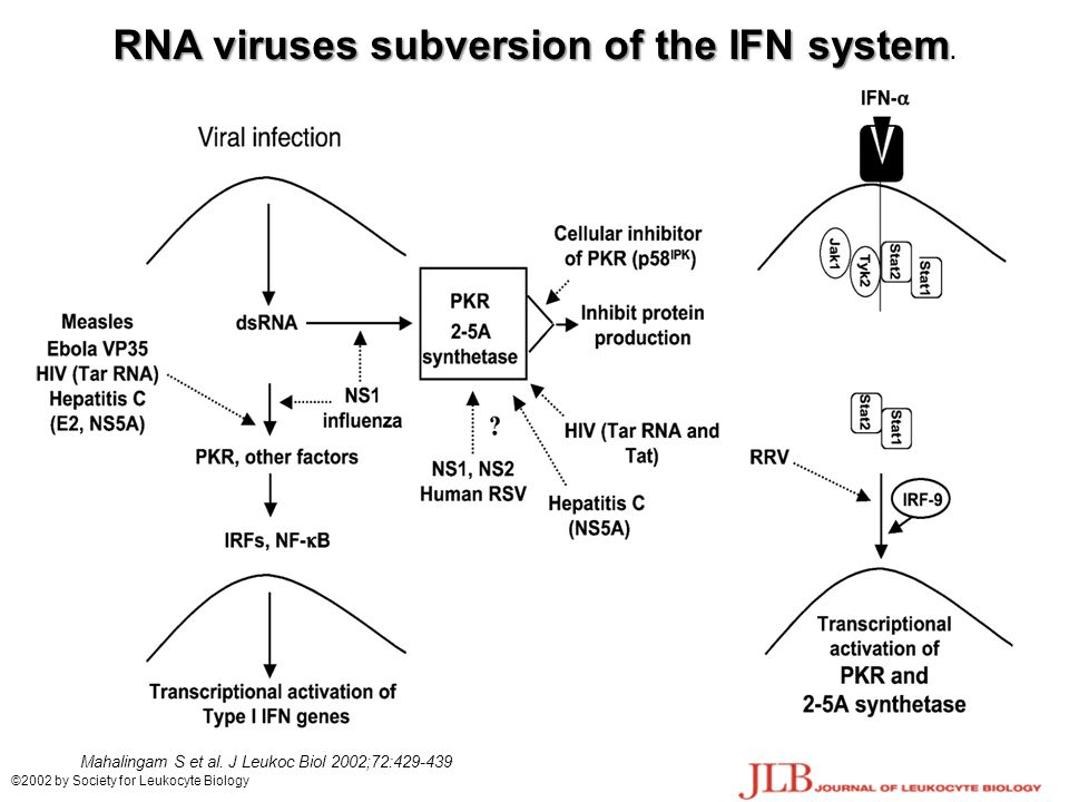 RNA viruses subversion of the IFN system RNA viruses subversion of the IFN system.
