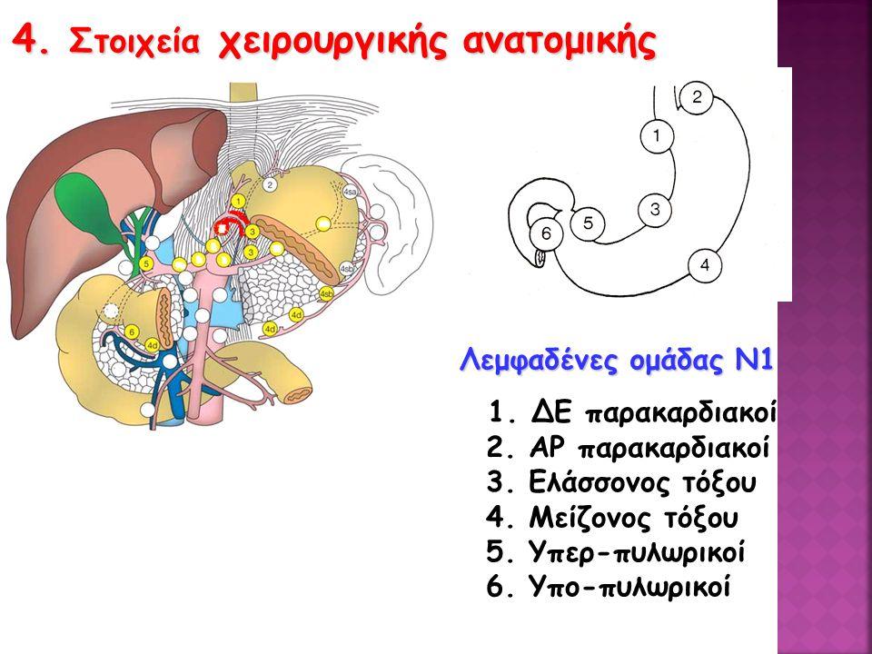 4.Στοιχεία χειρουργικής ανατομικής Λεμφαδένες ομάδας Ν1 1.