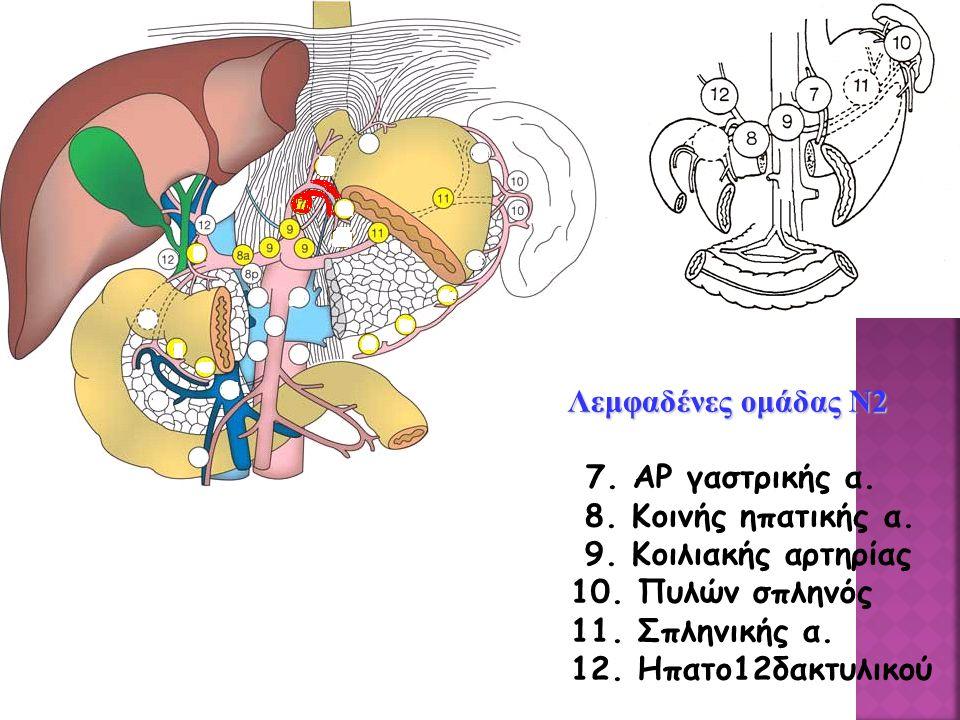 Λεμφαδένες ομάδας Ν2 Λεμφαδένες ομάδας Ν2 7.ΑΡ γαστρικής α.