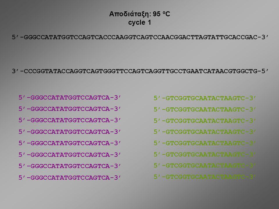 5'-GGGCCATATGGTCCAGTCACCCAAGGTCAGTCCAACGGACTTAGTATTGCACCGAC-3' 3'-CCCGGTATACCAGGTCAGTGGGTTCCAGTCAGGTTGCCTGAATCATAACGTGGCTG-5' DNA 5'-GGGCCATATGGTCCAGT
