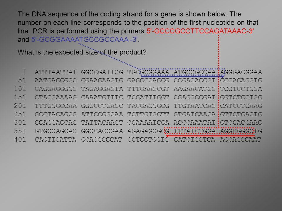 Η DNA πολυμεράση του Thermus aquaticus ονομάζεται Taq για συντομία Δεν κατστρέφεται στους 94ºC Δρα ιδανικά στους 72ºC