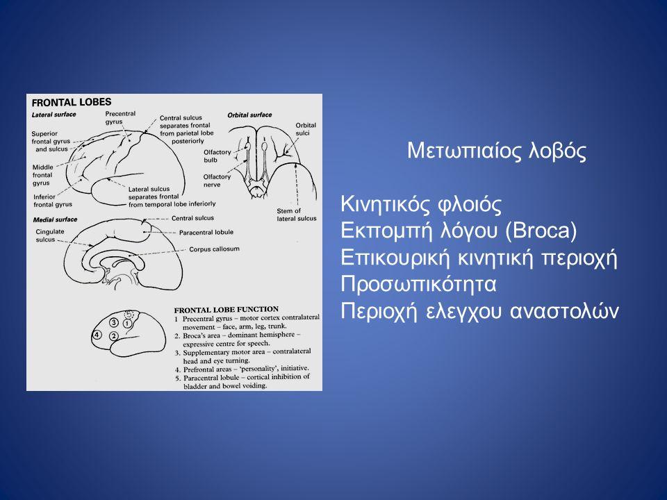 Μετωπιαίος λοβός Κινητικός φλοιός Εκπομπή λόγου (Broca) Επικουρική κινητική περιοχή Προσωπικότητα Περιοχή ελεγχου αναστολών