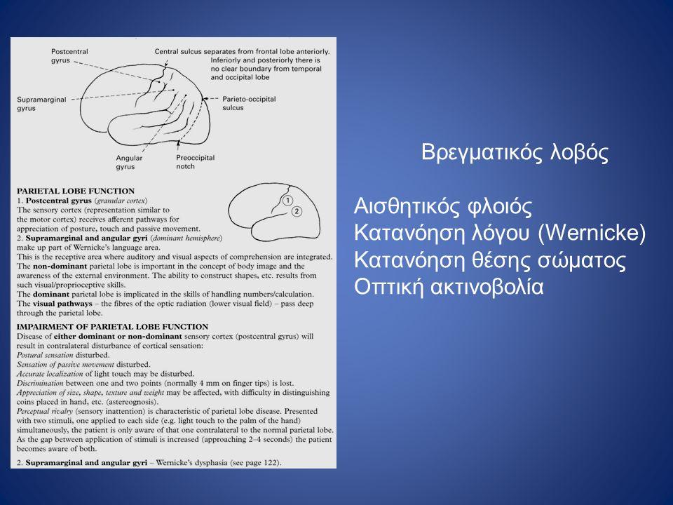 Βρεγματικός λοβός Αισθητικός φλοιός Κατανόηση λόγου (Wernicke) Κατανόηση θέσης σώματος Οπτική ακτινοβολία