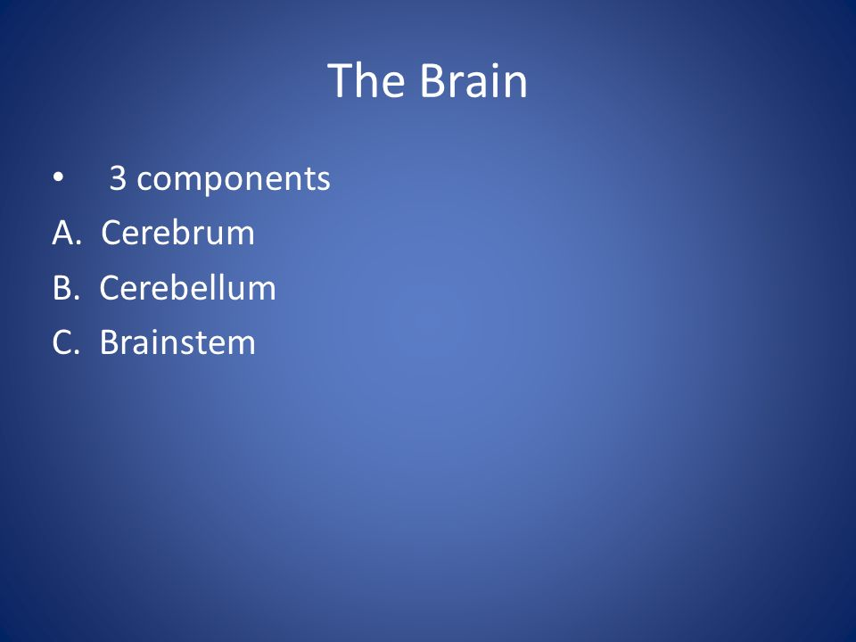 Lobes of the Cerebrum