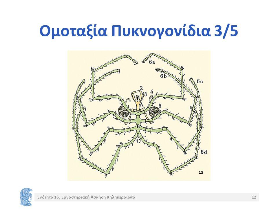 Ομοταξία Πυκνογονίδια 3/5 Ενότητα 16. Εργαστηριακή Άσκηση Χηληκεραιωτά12 15