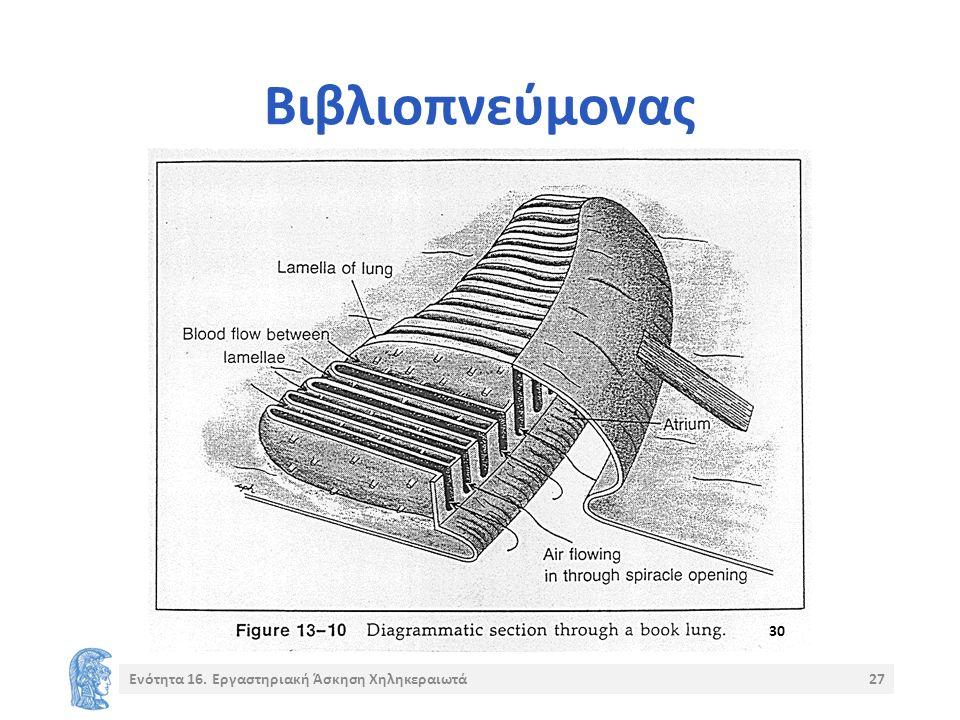 Βιβλιοπνεύμονας Ενότητα 16. Εργαστηριακή Άσκηση Χηληκεραιωτά27 30