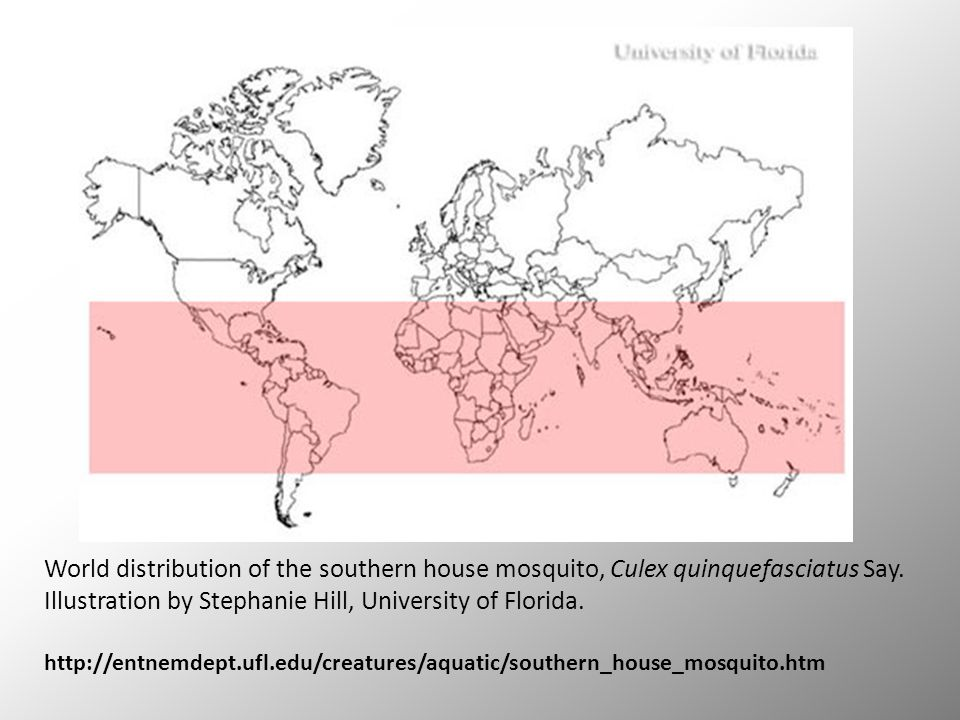 World distribution of the southern house mosquito, Culex quinquefasciatus Say.