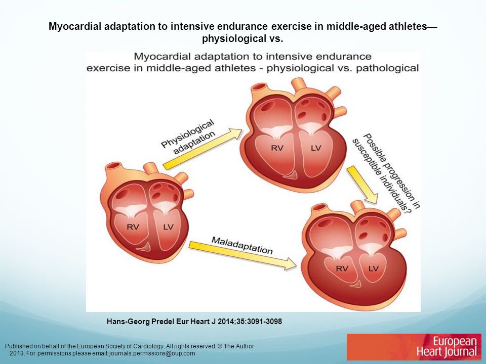 Myocardial adaptation to intensive endurance exercise in middle-aged athletes— physiological vs. Hans-Georg Predel Eur Heart J 2014;35:3091-3098 Publi