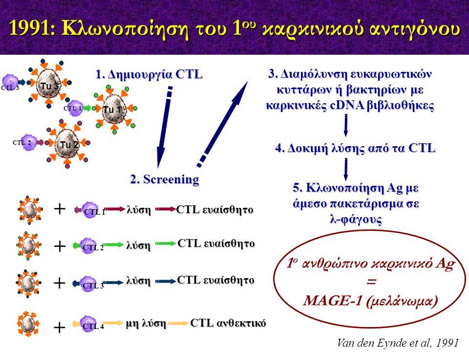 1991: Κλωνοποίηση του 1 ου καρκινικού αντιγόνου Van den Eynde et al, 1991 CTL 2 CTL 1 Τu 1 Τu 3 Τu 2 CTL 3 1. Δημιουργία CTL CTL 1 + CTL 2 + CTL 3 + C