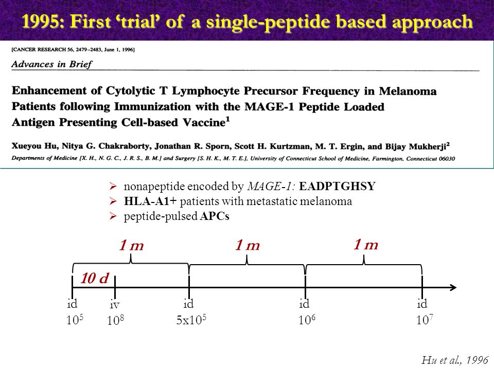 1995: First 'trial' of a single-peptide based approach Hu et al., 1996  nonapeptide encoded by MAGE-1: EADPTGHSY  HLA-A1+ patients with metastatic melanoma  peptide-pulsed APCs 10 d 1 m id 10 5 iv 10 8 id 5x10 5 id 10 6 id 10 7