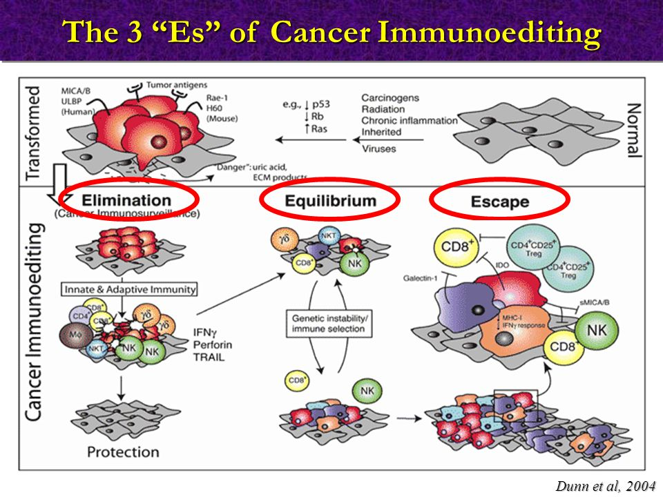 "The 3 ""Es"" of Cancer Immunoediting Dunn et al, 2004"