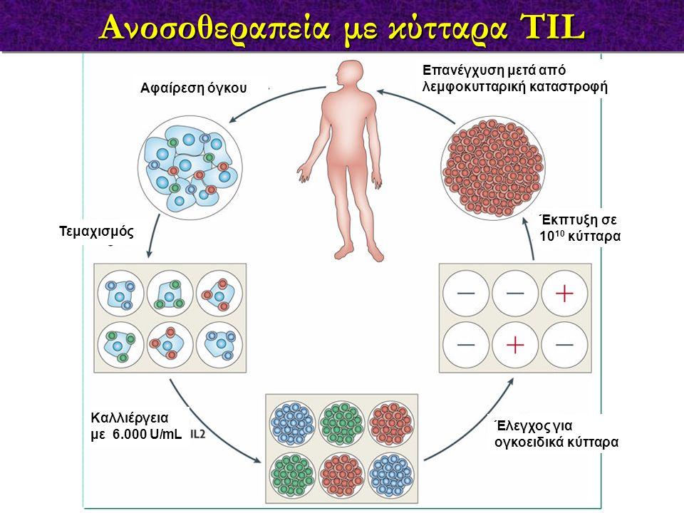 Ανοσοθεραπεία με κύτταρα TIL Αφαίρεση όγκου Τεμαχισμός Καλλιέργεια με 6.000 U/mL Έλεγχος για ογκοειδικά κύτταρα Έκπτυξη σε 10 10 κύτταρα Επανέγχυση με