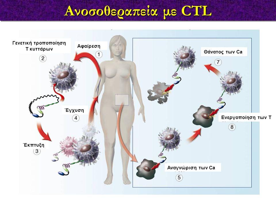 Ανοσοθεραπεία με CTL Έκπτυξη Γενετική τροποποίηση Τ κυττάρων Αφαίρεση Έγχυση Αναγνώριση των Ca Ενεργοποίηση των T Θάνατος των Ca