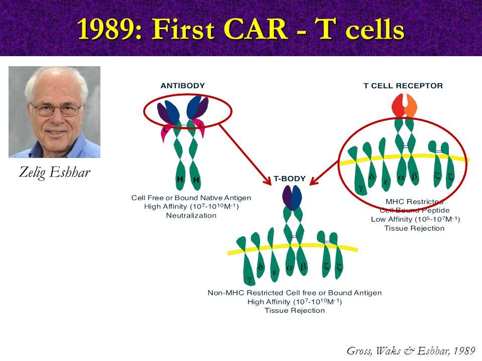 1989: First CAR - T cells Gross, Waks & Eshhar, 1989 Zelig Eshhar