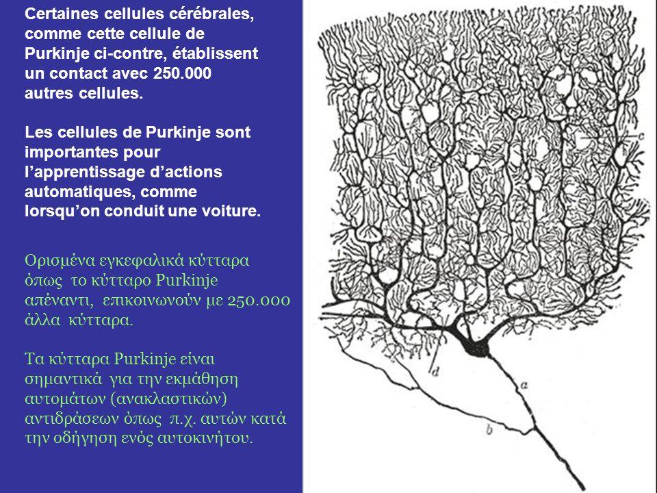 Notre cerveau est composé de 100 milliards de cellules cérébrales qui sont reliées chacune en moyenne à des milliers dautres cellules. Dans notre tête