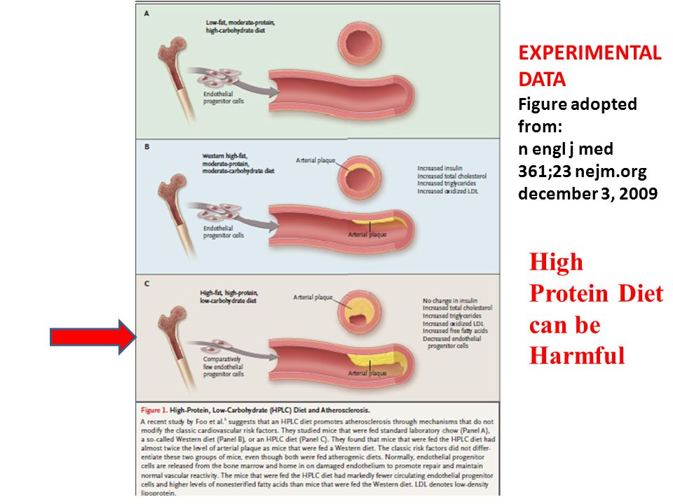 EXPERIMENTAL DATA Figure adopted from: n engl j med 361;23 nejm.org december 3, 2009 High Protein Diet can be Harmful