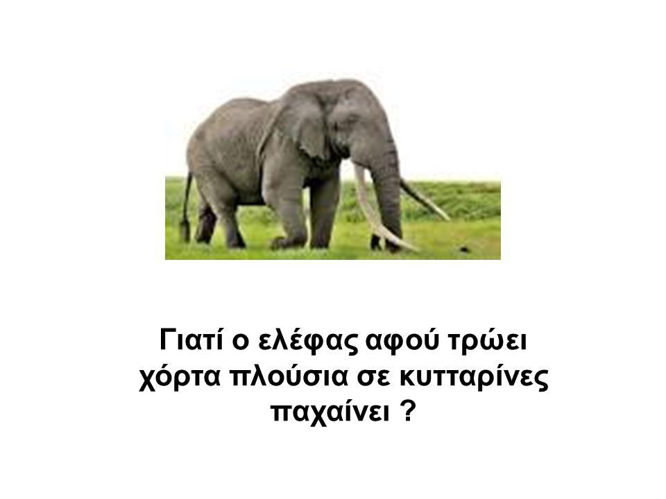 Γιατί ο ελέφας αφού τρώει χόρτα πλούσια σε κυτταρίνες παχαίνει