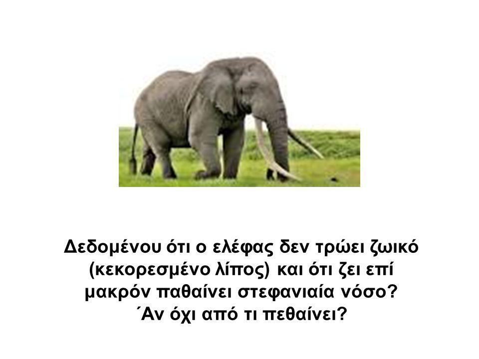 Δεδομένου ότι ο ελέφας δεν τρώει ζωικό (κεκορεσμένο λίπος) και ότι ζει επί μακρόν παθαίνει στεφανιαία νόσο.