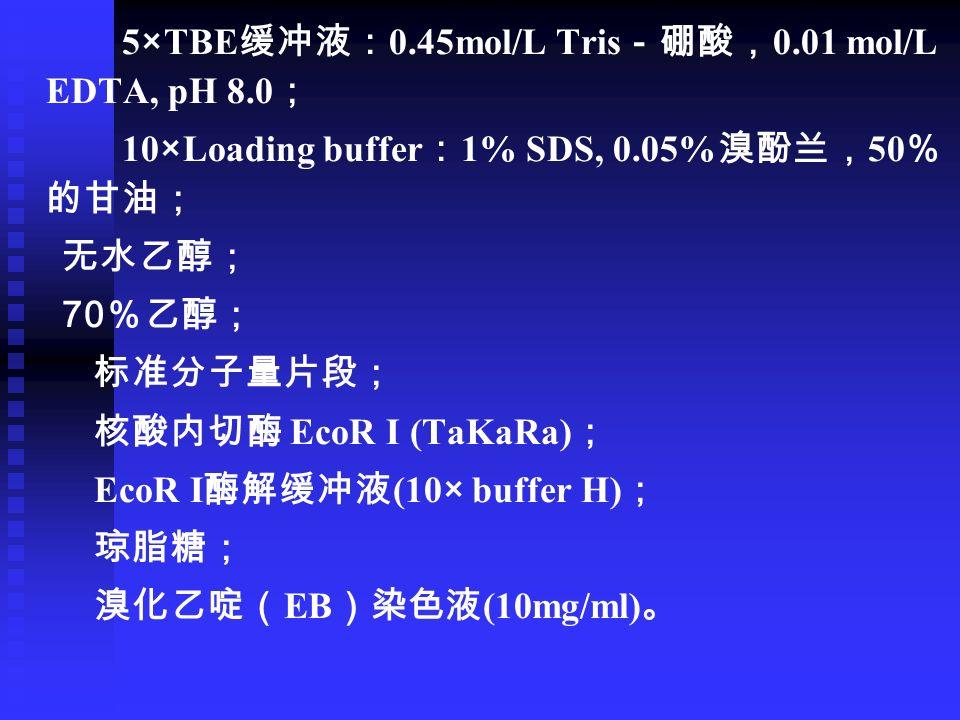 5×TBE 缓冲液: 0.45mol/L Tris -硼酸, 0.01 mol/L EDTA, pH 8.0 ; 10×Loading buffer : 1% SDS, 0.05% 溴酚兰, 50 % 的甘油; 无水乙醇; 70 %乙醇; 标准分子量片段; 核酸内切酶 EcoR I (TaKaRa) ; EcoR I 酶解缓冲液 (10× buffer H) ; 琼脂糖; 溴化乙啶( EB )染色液 (10mg/ml) 。