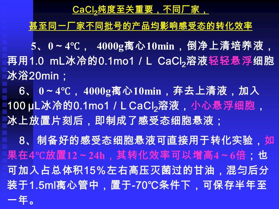 CaCl 2 纯度至关重要,不同厂家, 甚至同一厂家不同批号的产品均影响感受态的转化效率 5 、 0 ~ 4 ℃, 4000g 离心 10min ,倒净上清培养液, 再用 1.0 mL 冰冷的 0.1mo1 / L CaCl 2 溶液轻轻悬浮细胞, 冰浴 20min ; 6 、 0 ~ 4 ℃, 4000g 离心 10min ,弃去上清液,加入 100 µL 冰冷的 0.1mo1 / L CaCl 2 溶液,小心悬浮细胞, 冰上放置片刻后,即制成了感受态细胞悬液; 8 、制备好的感受态细胞悬液可直接用于转化实验,如 果在 4 ℃放置 12 ~ 24h ,其转化效率可以增高 4 ~ 6 倍;也 可加入占总体积 15 %左右高压灭菌过的甘油,混匀后分 装于 1.5ml 离心管中,置于 -70 ℃条件下,可保存半年至 一年。