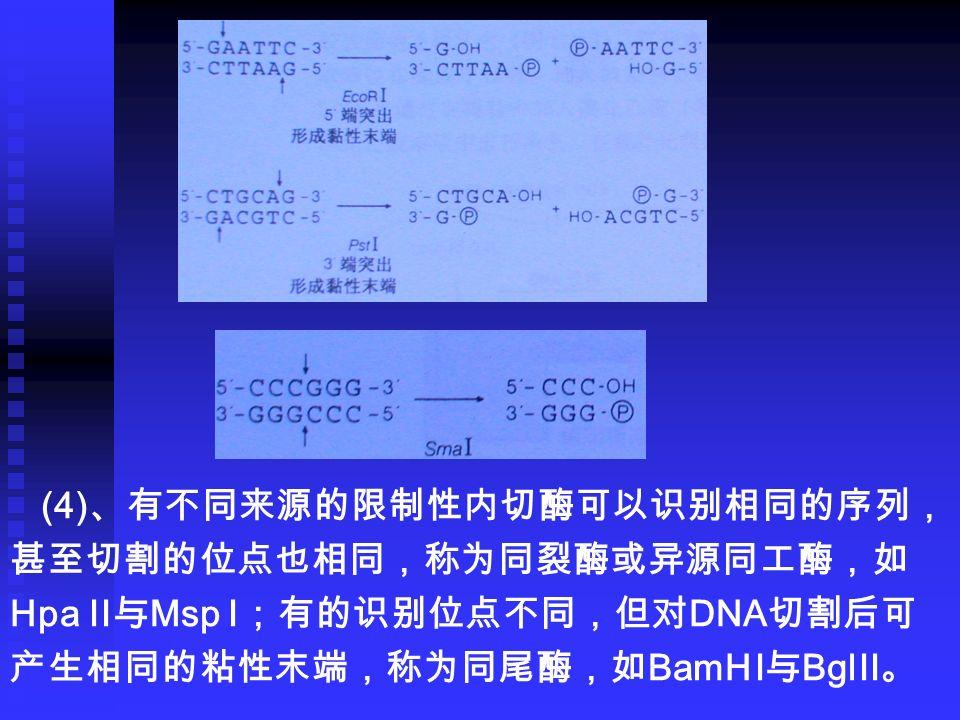 (4) 、有不同来源的限制性内切酶可以识别相同的序列, 甚至切割的位点也相同,称为同裂酶或异源同工酶,如 Hpa II 与 Msp I ;有的识别位点不同,但对 DNA 切割后可 产生相同的粘性末端,称为同尾酶,如 BamH I 与 Bgl II 。