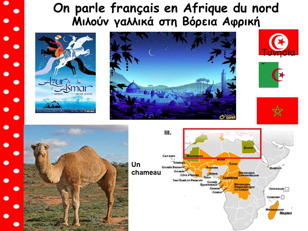 On parle français en Afrique du nord Μιλούν γαλλικά στη Βόρεια Αφρική Tυνησία - Un chameau