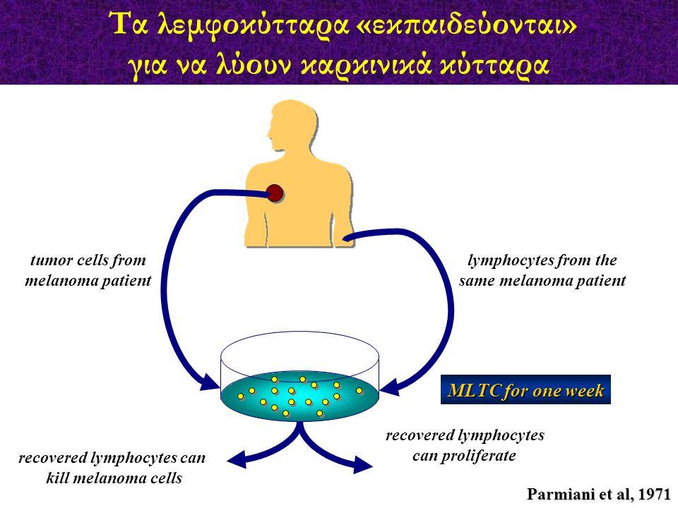 Τα λεμφοκύτταρα «εκπαιδεύονται» για να λύουν καρκινικά κύτταρα tumor cells from melanoma patient lymphocytes from the same melanoma patient MLTC for o