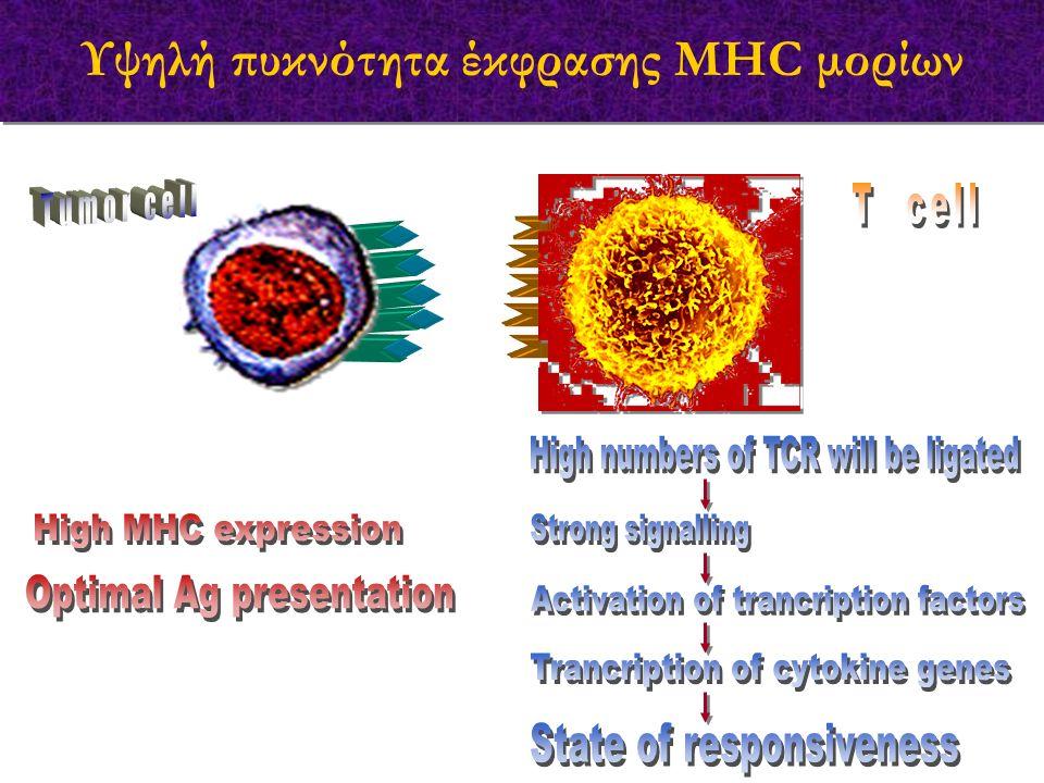 Υψηλή πυκνότητα έκφρασης MHC μορίων