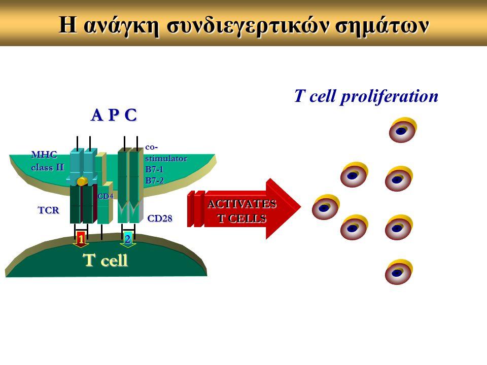 A P C T cell MHC class II TCR co-stimulatorB7-1B7-2 12 CD4 ACTIVATES T CELLS T cell proliferation Η ανάγκη συνδιεγερτικών σημάτων CD28