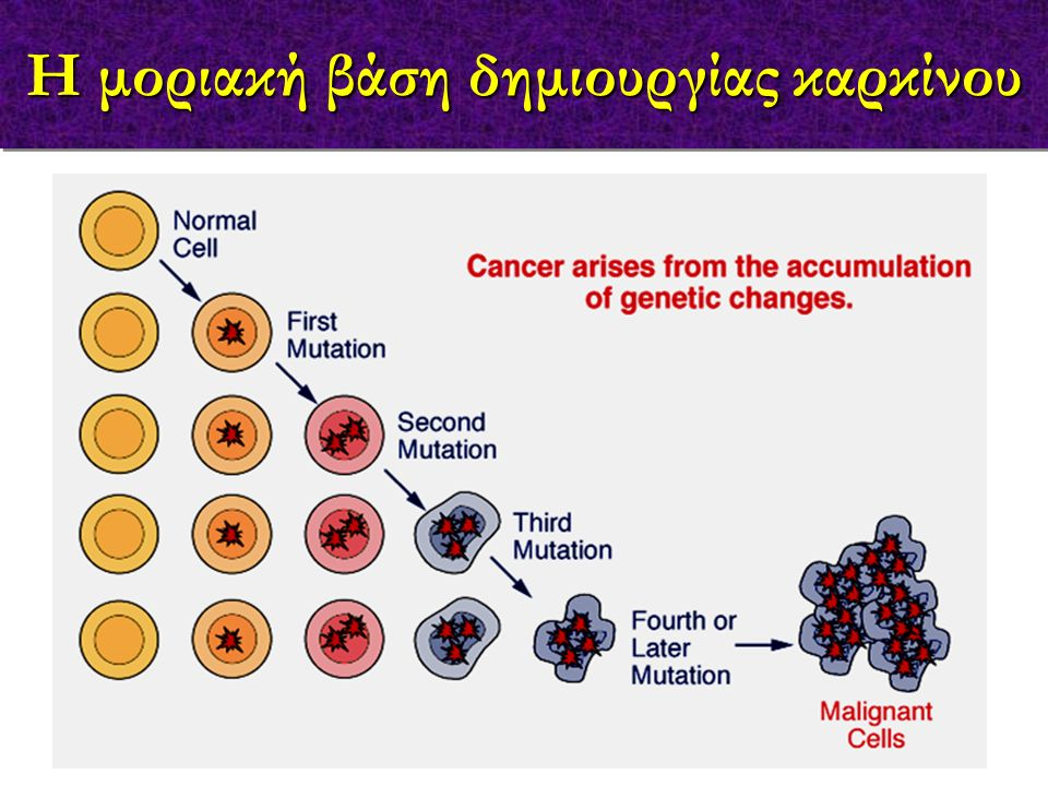 1965: # immunological memory for cancer cells (mice) # immune surveillance-recognition and destruction of non-self tumor cells on their appearance 1908: positive mechanism eliminating transformed cells 1970: lymphocytes can kill autologous melanoma cells 1991: cloning of the first tumor antigen (Belgium) 2003: therapeutic & prophylactic vaccines in the market Κύριοι σταθμοί στην Ανοσολογία του Καρκίνου