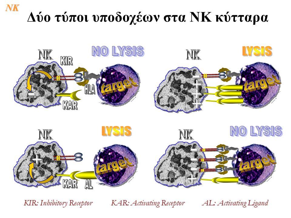 -- ++ -- ++ ++ ++ -- -- -- ++ KIR: Inhibitory ReceptorKAR: Activating Receptor AL: Activating Ligand Δύο τύποι υποδοχέων στα ΝΚ κύτταραNK