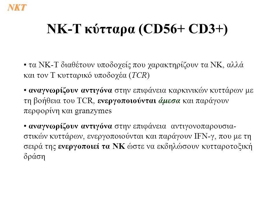 τα ΝΚ-T διαθέτουν υποδοχείς που χαρακτηρίζουν τα ΝΚ, αλλά και τον Τ κυτταρικό υποδοχέα (TCR) αναγνωρίζουν αντιγόνα στην επιφάνεια καρκινικών κυττάρων με τη βοήθεια του TCR, ενεργοποιούνται άμεσα και παράγουν περφορίνη και granzymes αναγνωρίζουν αντιγόνα στην επιφάνεια αντιγονοπαρουσια- στικών κυττάρων, ενεργοποιούνται και παράγουν IFN-γ, που με τη σειρά της ενεργοποιεί τα ΝΚ ώστε να εκδηλώσουν κυτταροτοξική δράση NK-T κύτταρα (CD56+ CD3+)NKΤ