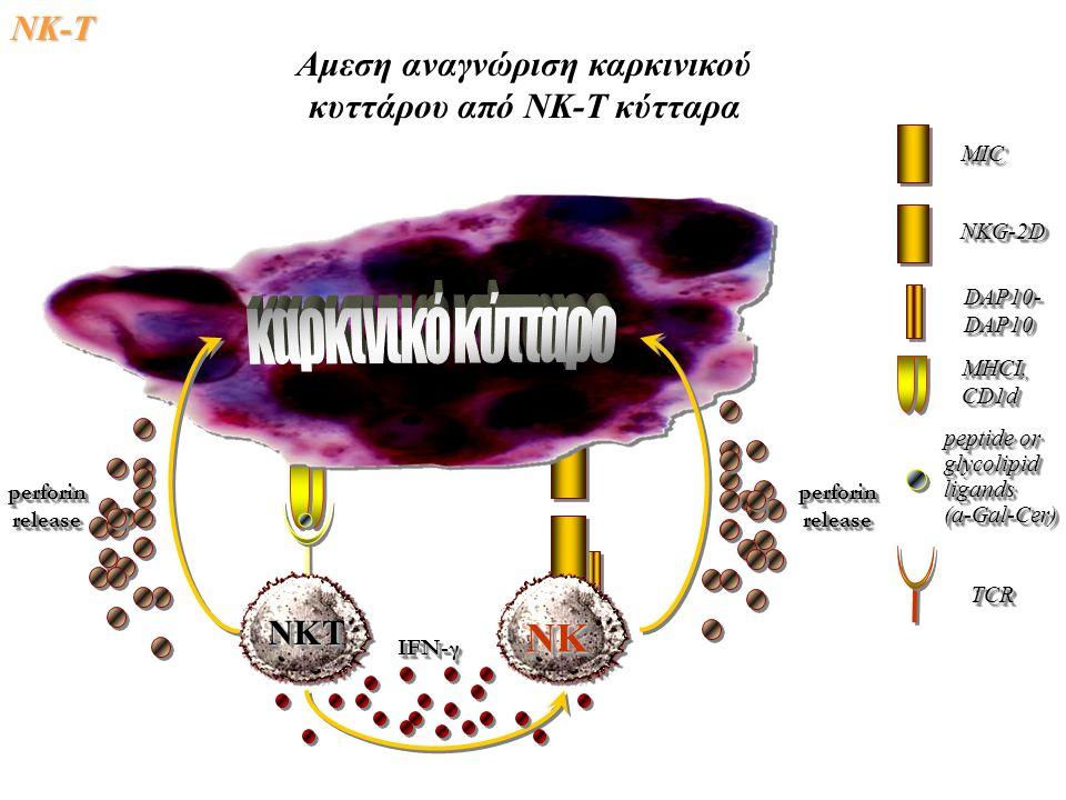 NK-Τ ΝΚΤΝΚΤ ΝΚΝΚ IFN-γ perforinreleaseperforinreleaseperforinreleaseperforinrelease MICMIC NKG-2DNKG-2D DAP10-DAP10DAP10-DAP10 MHCI,CD1dMHCI,CD1d peptide or glycolipidligands(a-Gal-Cer) glycolipidligands(a-Gal-Cer) TCRTCR Αμεση αναγνώριση καρκινικού κυττάρου από ΝΚ-Τ κύτταρα
