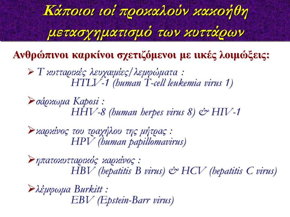Κάποιοι ιοί προκαλούν κακοήθη μετασχηματισμό των κυττάρων Ανθρώπινοι καρκίνοι σχετιζόμενοι με ιικές λοιμώξεις: Τ κυτταρικές λευχαιμίες/λεμφώματα :  Τ κυτταρικές λευχαιμίες/λεμφώματα : HTLV-1 (human T-cell leukemia virus 1)  σάρκωμα Καposi : HHV-8 (human herpes virus 8) & HIV-1  καρκίνος του τραχήλου της μήτρας : HPV (human papillomavirus)  ηπατοκυτταρικός καρκίνος : HBV (hepatitis B virus) & HCV (hepatitis C virus)  λέμφωμα Burkitt : EBV (Epstein-Barr virus)