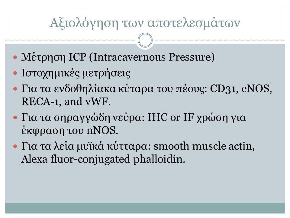 Αξιολόγηση των αποτελεσμάτων Μέτρηση ICP (Intracavernous Pressure) Ιστοχημικές μετρήσεις Για τα ενδοθηλίακα κύταρα του πέους: CD31, eNOS, RECA-1, and