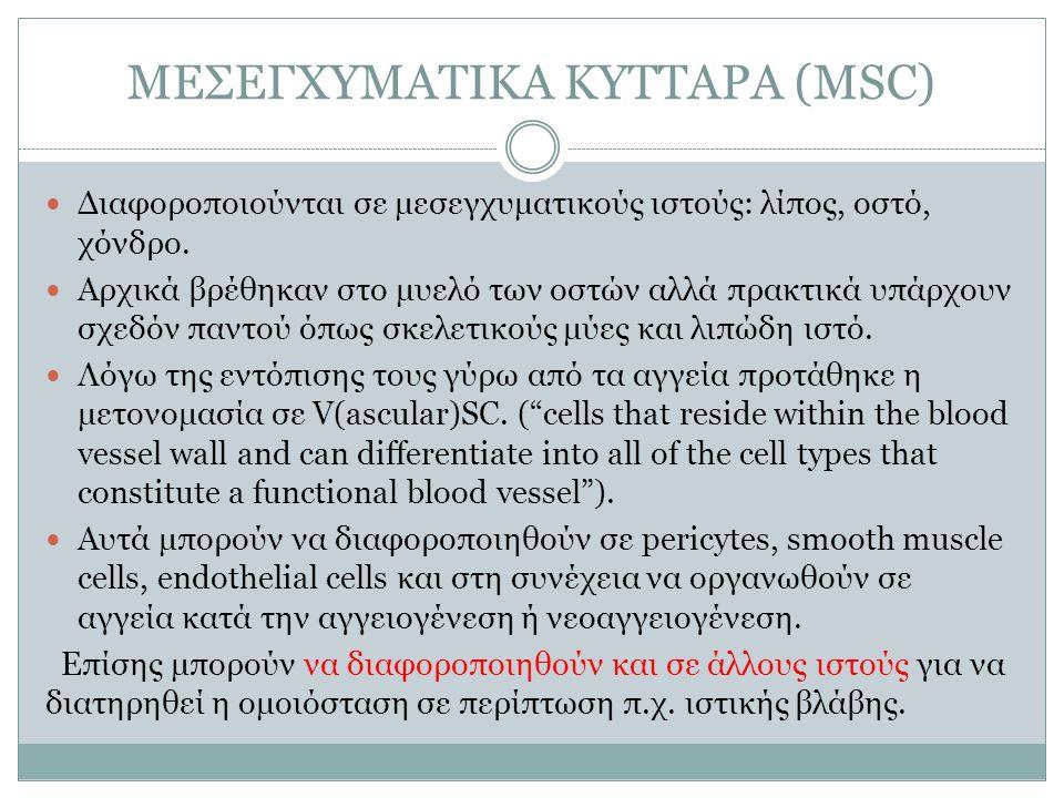 ΜΕΣΕΓΧΥΜΑΤΙΚΑ ΚΥΤΤΑΡΑ (MSC) Διαφοροποιούνται σε μεσεγχυματικούς ιστούς: λίπος, οστό, χόνδρο. Αρχικά βρέθηκαν στο μυελό των οστών αλλά πρακτικά υπάρχου