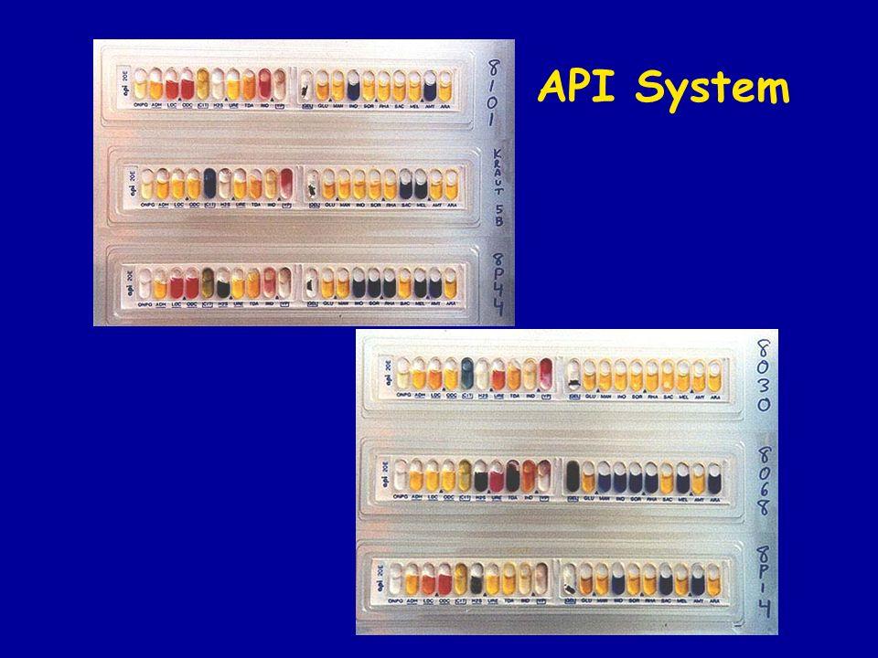API System