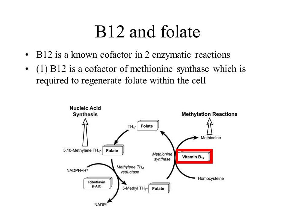 B12 and folate B12 is a known cofactor in 2 enzymatic reactions (1) B12 is a cofactor of methionine synthase which is required to regenerate folate within the cell