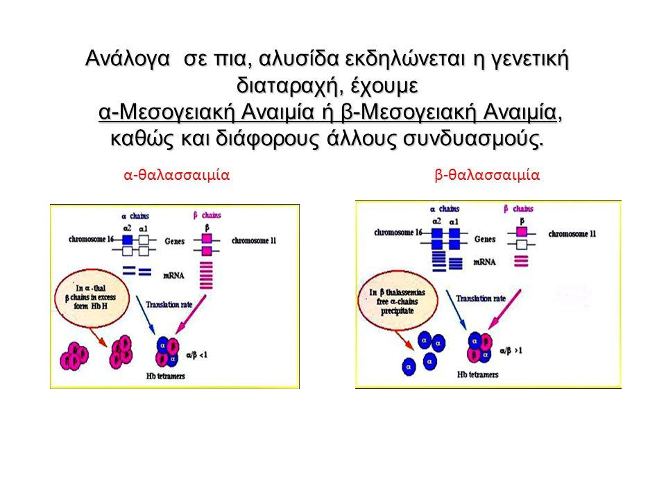 Ανάλογα σε πια, αλυσίδα εκδηλώνεται η γενετική διαταραχή, έχουμε α-Μεσογειακή Αναιμία ή β-Μεσογειακή Αναιμία, καθώς και διάφορους άλλους συνδυασμούς.